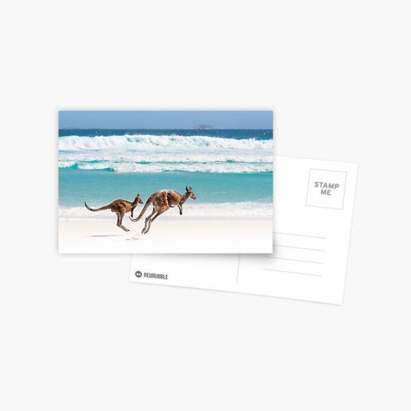 Kangaroos at Lucky Bay Postcard