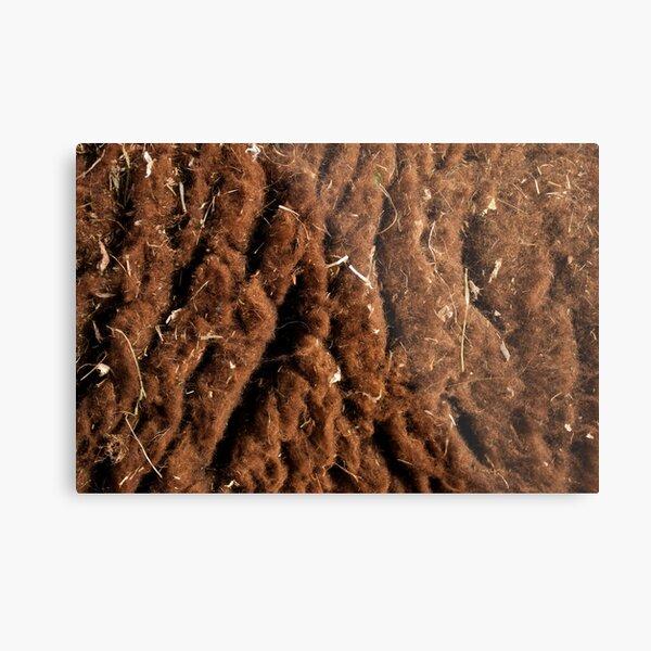 Brown Sheep Wool  Metal Print