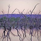 Dusk - Lily Creek Lagoon, Kununurra, Western Australia by Adrian Paul