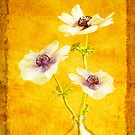 Anemones by Colleen Farrell
