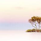 Dreamy Pastel Dawn by Oceansoul  Photografix - Susie Thomspon
