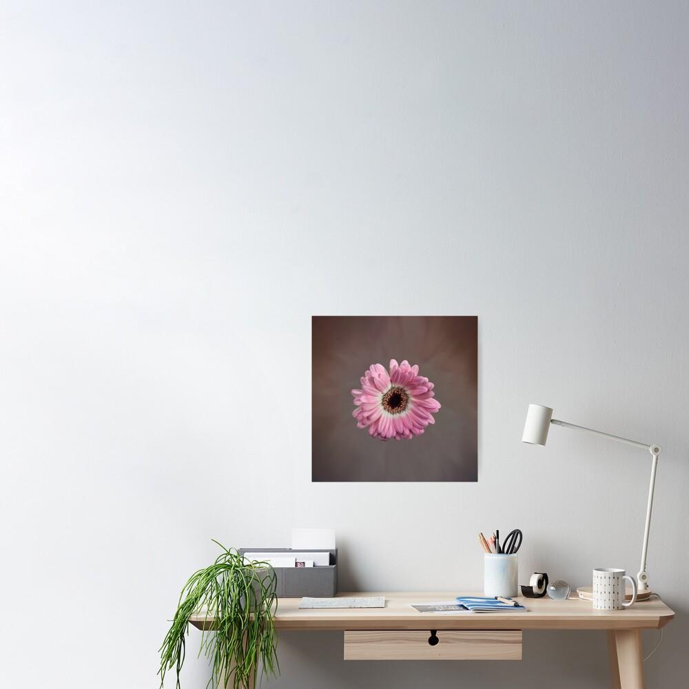 Single pink Gerbera Flower Poster