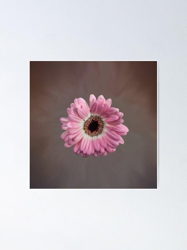 Alternate view of Single pink Gerbera Flower Poster