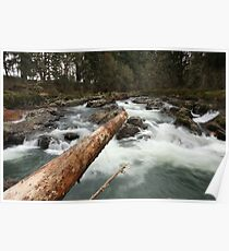 Falls On The Calapooia River / Log Poster