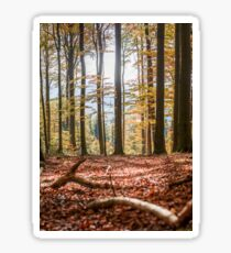 Autumn forest with sunshine and leaves, Bavaria, Germany. Sticker