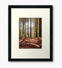 Autumn forest with sunshine and leaves, Bavaria, Germany. Framed Print