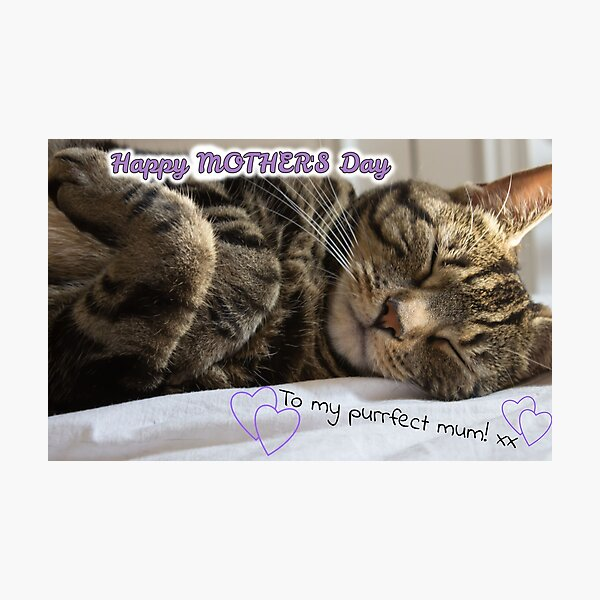 Cute Sleeping Tabby Mother's Day Card Photographic Print