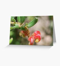Proteaceae - Mountain Grevillea Greeting Card
