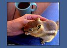 Coffee With Chippy by Betsy  Seeton