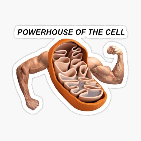 Mitochondria Sticker By Davis6024 Redbubble