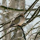 Dove on Branches by little1sandra