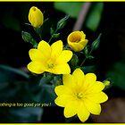 Romantic card by daffodil