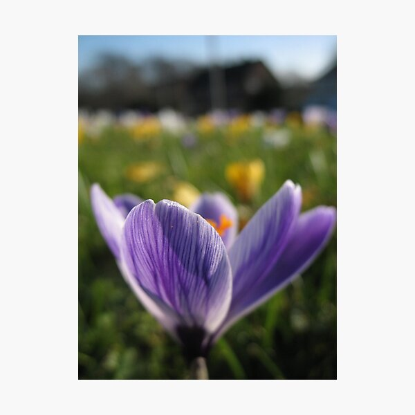 Purple and beyond Photographic Print