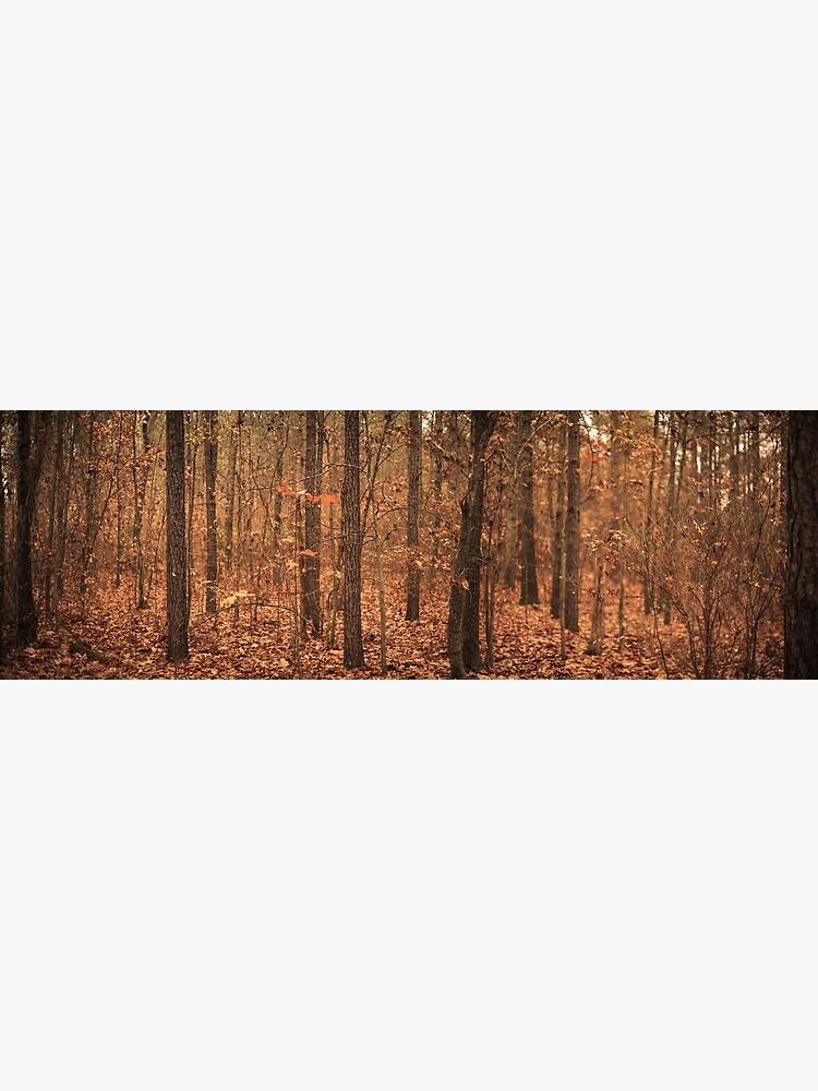 Woods of North Carolina by richwest
