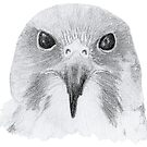 Peregrine Falcon by Linda Ursin