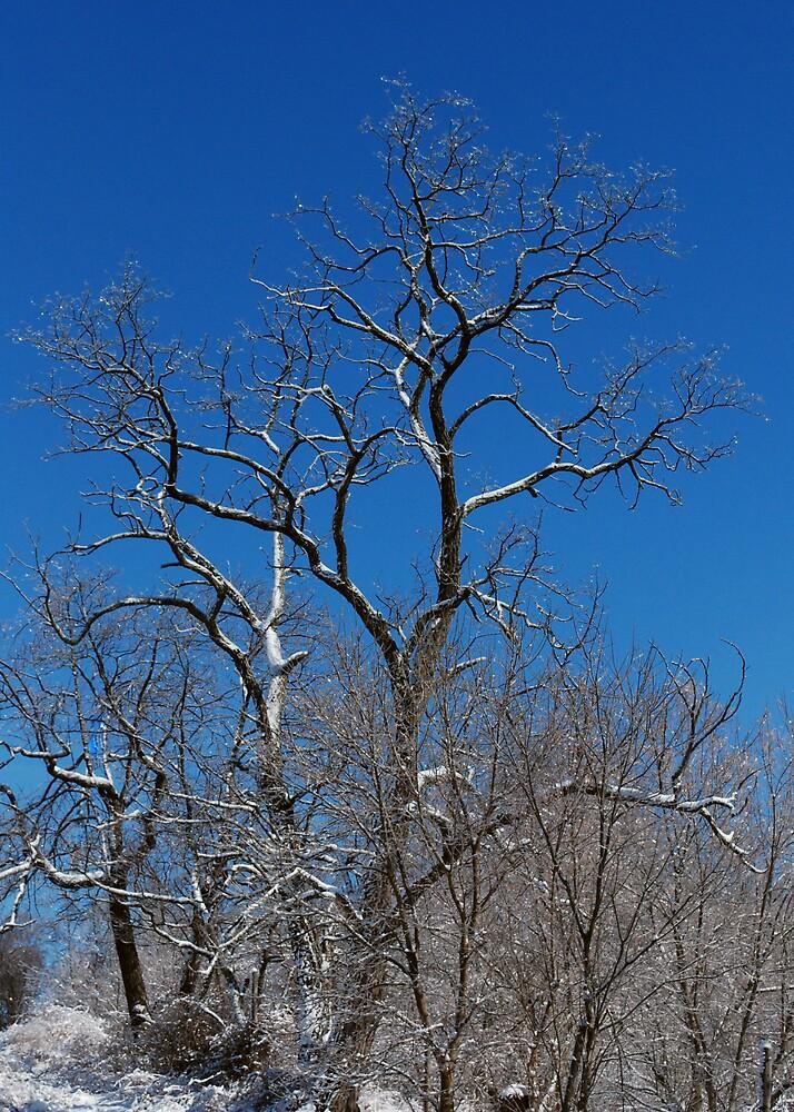 Loan Tree by amathers