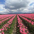 Pink beauties! by SavingMemories