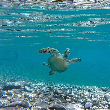 Under water sea turtle by DerBen