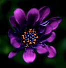 Deep in the Colour Purple by Ingrid Beddoes