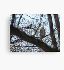 Great Horned Owl Versus Crow Canvas Print