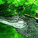 Croc Justin Beck Picture 2015084 by Justin Beck