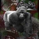 Endangered Gorillas Justin Beck Picture 2015094 by Justin Beck