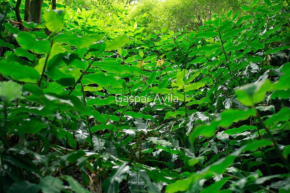 Green foliage by Gaspar Avila