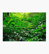 Green foliage Photographic Print