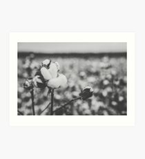 Cotton field in the countryside Art Print