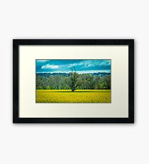 Lonely old tree Framed Print