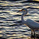 White Heron by Edward Shepherd