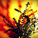 the burning bush by Shannon Byous Ruddy