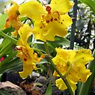 Scolding Yellow Orchid by Donna R. Cole