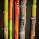 « Colors Bamboos » par Philippe Sainte-Laudy