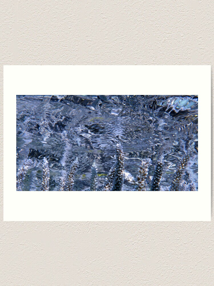 Alternate view of Acropora Reflections Art Print