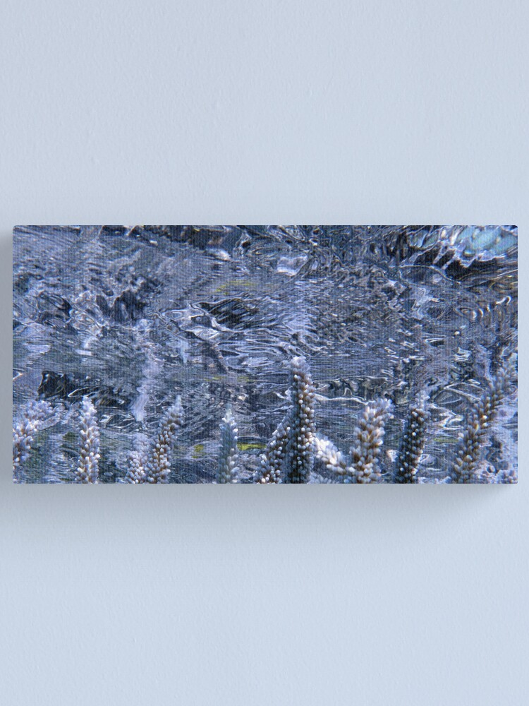 Alternate view of Acropora Reflections Canvas Print