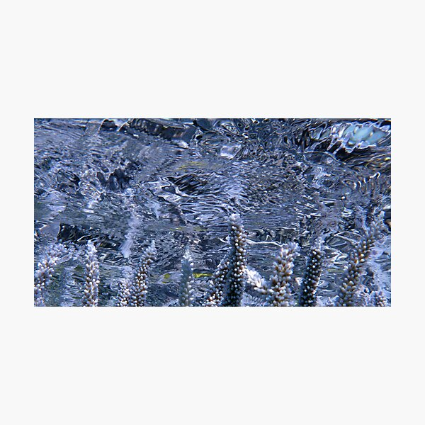 Acropora Reflections Photographic Print