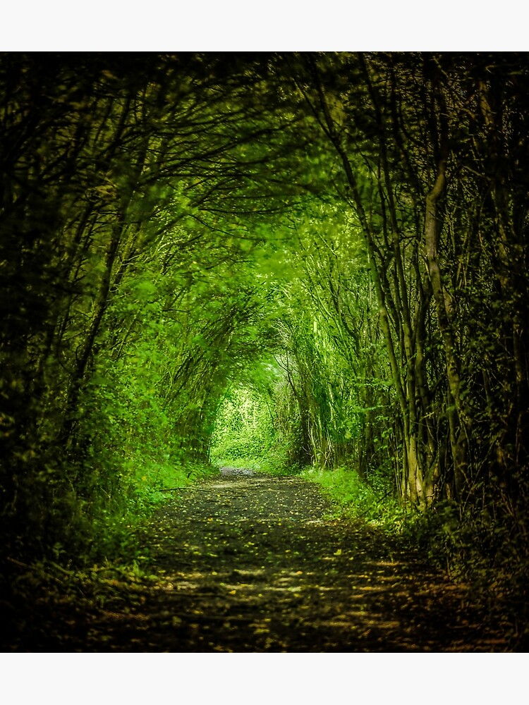 Natures trail by richwest