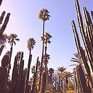 Palmen, Kaktus und Sommer von claraphies