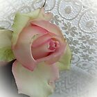 Rose delicate colors by Ana Belaj