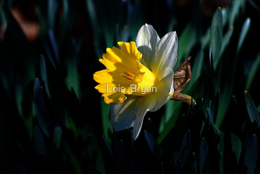 Daffy Morning by Lois  Bryan