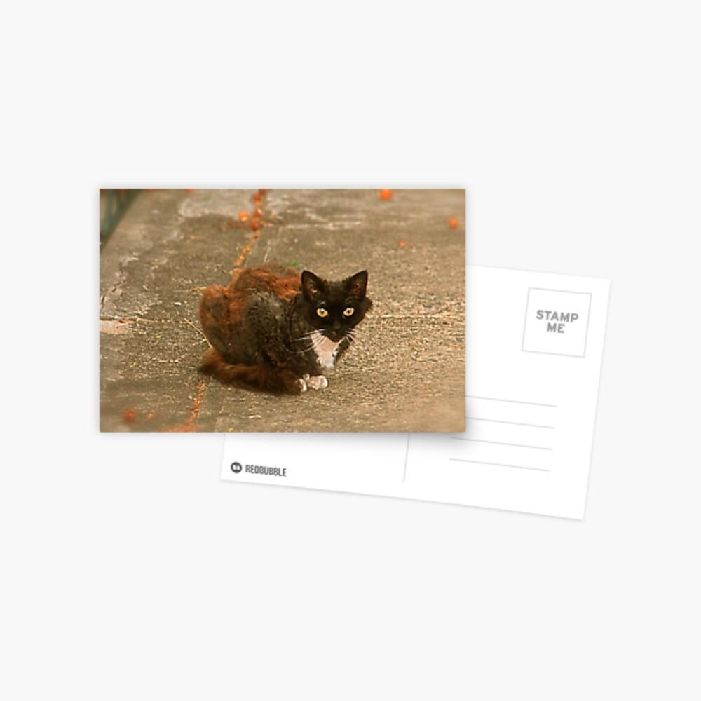 Bumper, The Local Alley Cat Postcard
