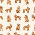 Toy Poodle apricot coat dog breed pet portrait dog breeds poodles by PetFriendly