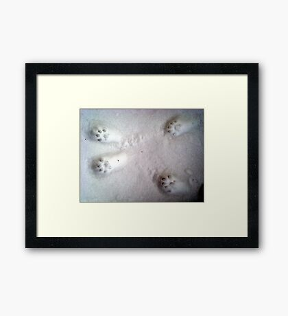 Paw Prints in the Snow Framed Print