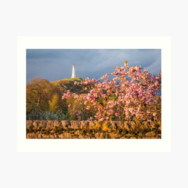 Hoad Blossom Art Print