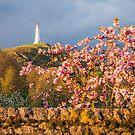 Hoad Blossom by Stephen Miller