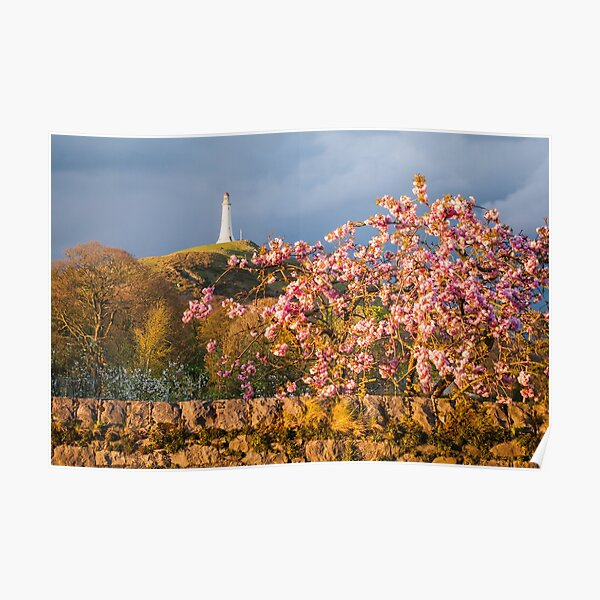 Hoad Blossom Poster