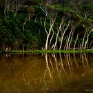 Tree reflections tidal river by Emergy