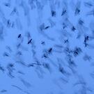 Black birds on blue 4 by Javimage