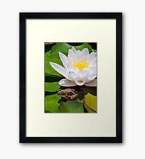 White Water Lily with Frog Framed Print